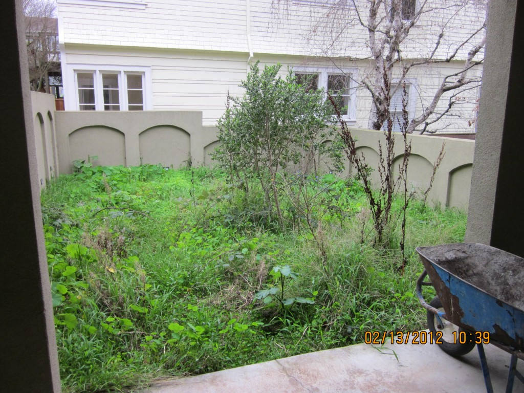 san francisco backyard before after landscaping forevergreen